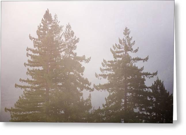 Big Sur California Greeting Cards - Pacific Coast Fog Shrouding Redwood Greeting Card by Rich Reid