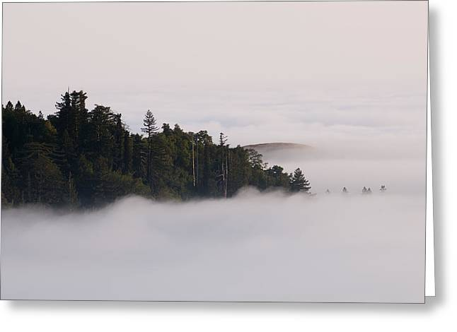 Santa Lucia Mountains Greeting Cards - Pacific Coast Fog Shrouding The Redwood Greeting Card by Rich Reid