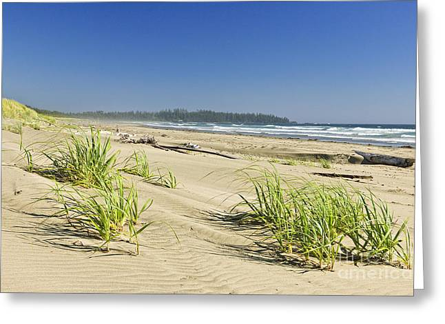 Foggy Beach Greeting Cards - Pacific ocean shore on Vancouver Island Greeting Card by Elena Elisseeva