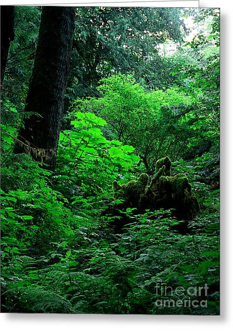 Douglas Fir Trees Greeting Cards - Pacific Rim National Park 11 Greeting Card by Terry Elniski
