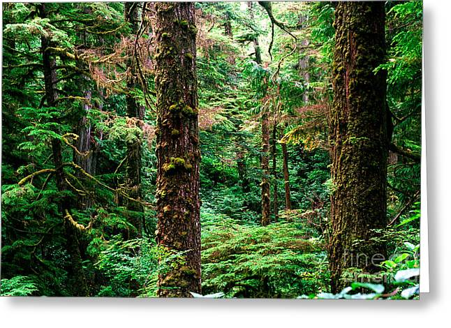 Douglas Fir Trees Greeting Cards - Pacific Rim National Park 14 Greeting Card by Terry Elniski