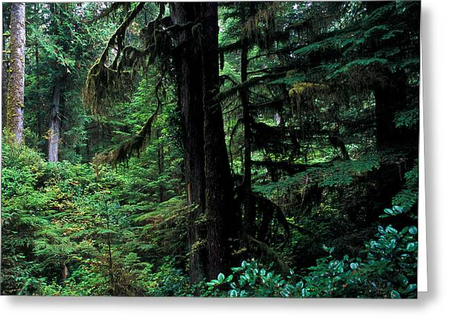 Douglas Fir Trees Greeting Cards - Pacific Rim National Park 3 Greeting Card by Terry Elniski