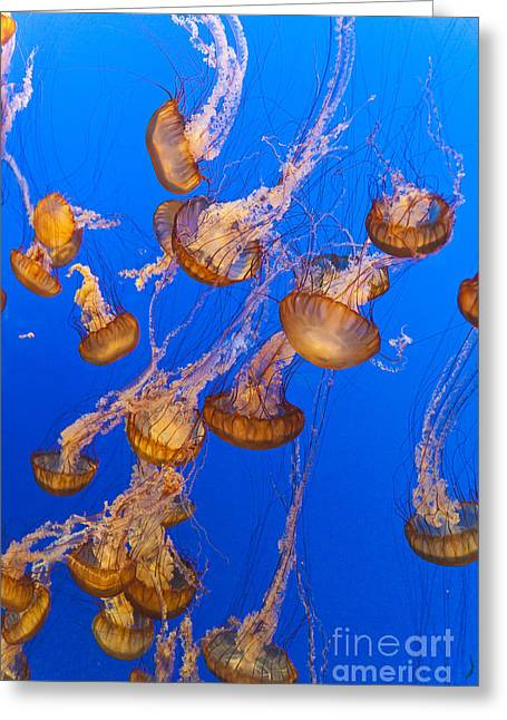 Medusa Greeting Cards - Pack of Jelly Fish Greeting Card by Darcy Michaelchuk