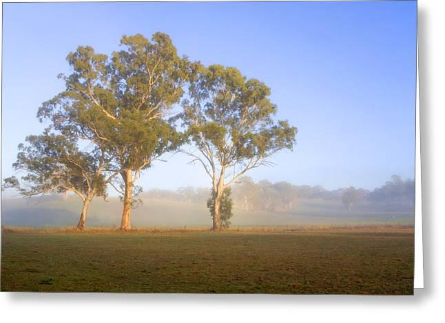 Gum-tree Greeting Cards - Paddock Sunrise Greeting Card by Mike  Dawson