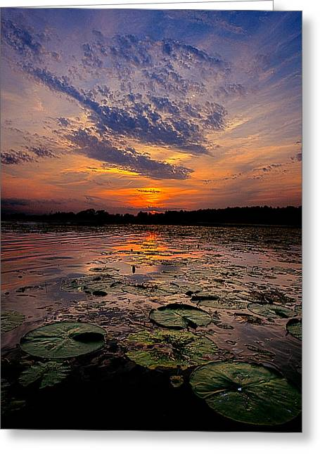 Geographic Greeting Cards - Pads Greeting Card by Phil Koch