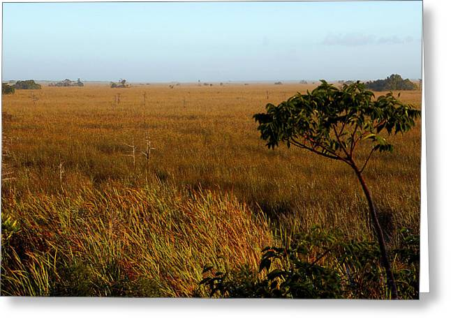Scenic Artwork Greeting Cards - PaHayOkee Greeting Card by David Lee Thompson