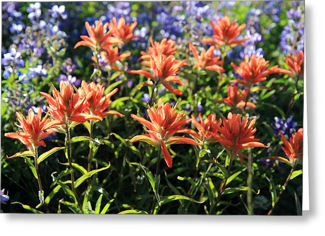 Paradise Road Greeting Cards - Paintbrushes Wildflowers Rainier National Park Greeting Card by Pierre Leclerc Photography