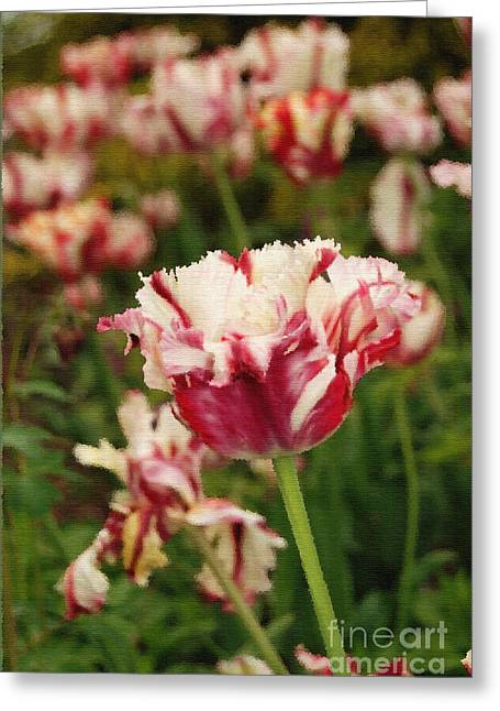 Paint Photograph Greeting Cards - Painted Candy Cane Tulip Greeting Card by Eva Kaufman