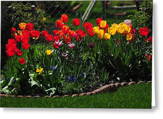 Colorful Photos Greeting Cards - Painted Flowers Greeting Card by Frozen in Time Fine Art Photography