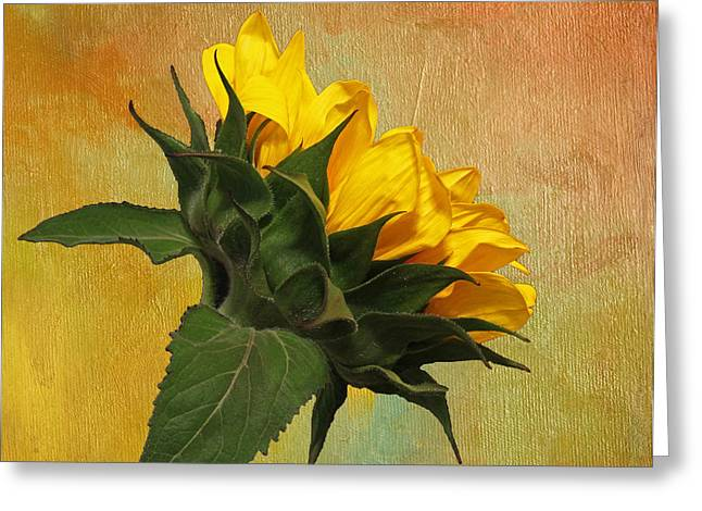 Yellow Sunflower Greeting Cards - Painted Golden Beauty Greeting Card by Judy Vincent