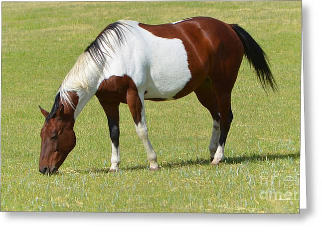 Beautiful Equine Photos Fine Art Greeting Cards - Painted Horse Greeting Card by Donna Van Vlack