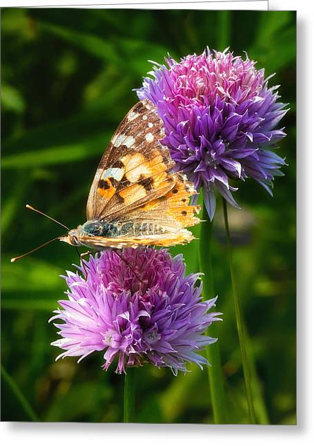 Recently Sold -  - Morph Greeting Cards - Painted lady -Vanessa Cardu Greeting Card by Bill Tiepelman