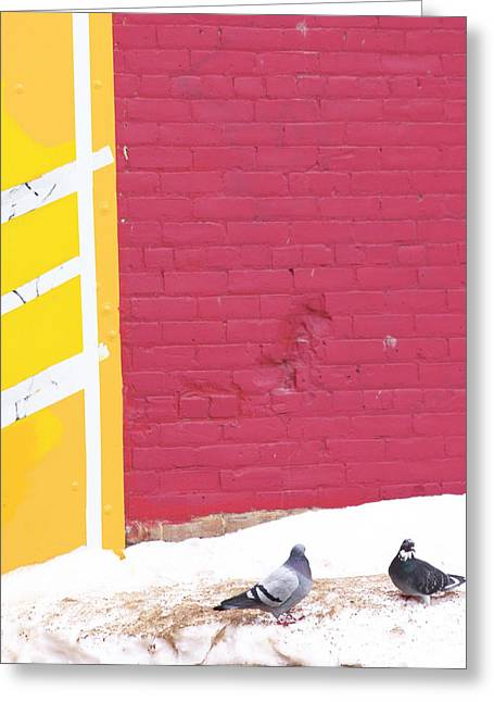 Edmonton Photographer Greeting Cards - Painted Pigeon  Greeting Card by Jerry Cordeiro