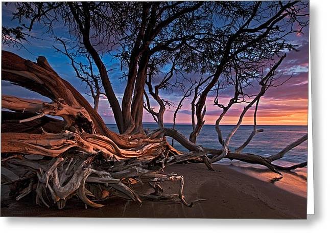 ; Maui Greeting Cards - Painted Tree Greeting Card by James Roemmling