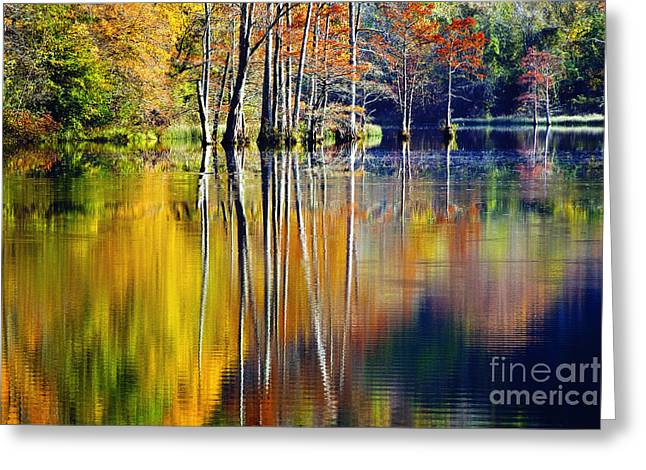 Tamyra Ayles Greeting Cards - Painted Trees at Beavers Bend Greeting Card by Tamyra Ayles