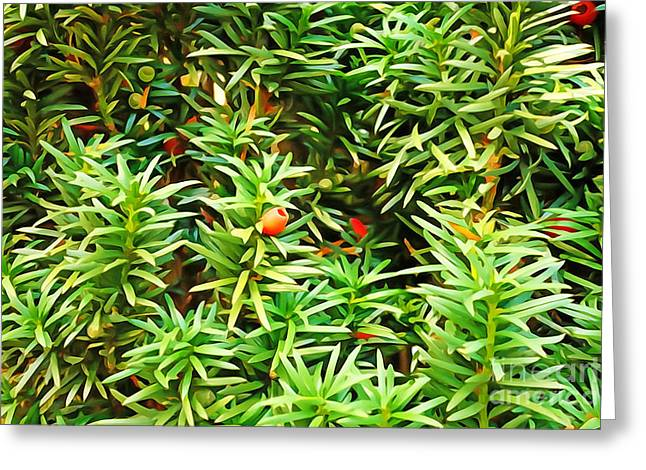 Painterly Greeting Cards - Painterly Foliage Yew Greeting Card by Lutz Baar