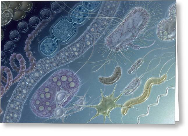 Biological Charts And Diagrams Greeting Cards - Painting Of 17 Types Of Bacteria Greeting Card by Jane Hurd