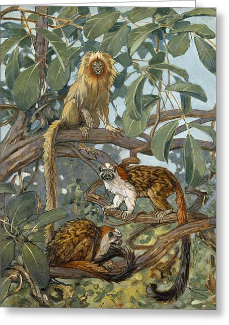 The Amazons Greeting Cards - Painting Of Marmosets In The Jungle Greeting Card by Elie Cheverlange