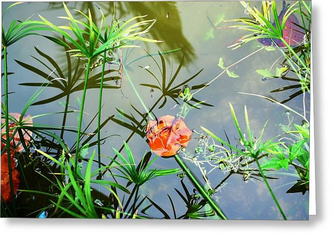 Lilly Pads Greeting Cards - Painting on a Pond Greeting Card by Peter  McIntosh