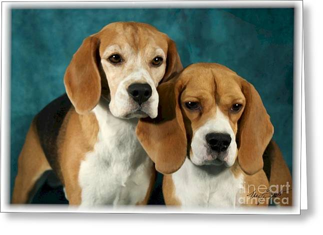 Dogs Digital Greeting Cards - Pair of Beagles Greeting Card by Maxine Bochnia