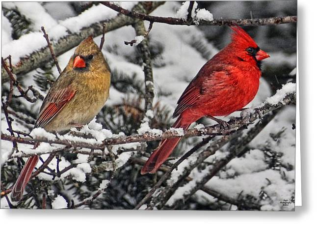 Male Cardinals In Snow Greeting Cards - Pair of Cardinals in Winter Greeting Card by Peg Runyan