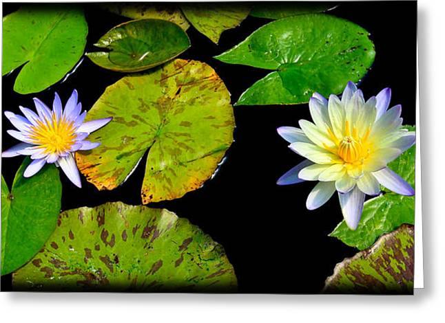 Abstract Nature Greeting Cards - Pair of Water Lillys Greeting Card by Steve McKinzie