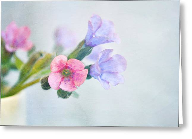 Lyn Randle Greeting Cards - Pale pink and purple Pulmonaria flowers Greeting Card by Lyn Randle
