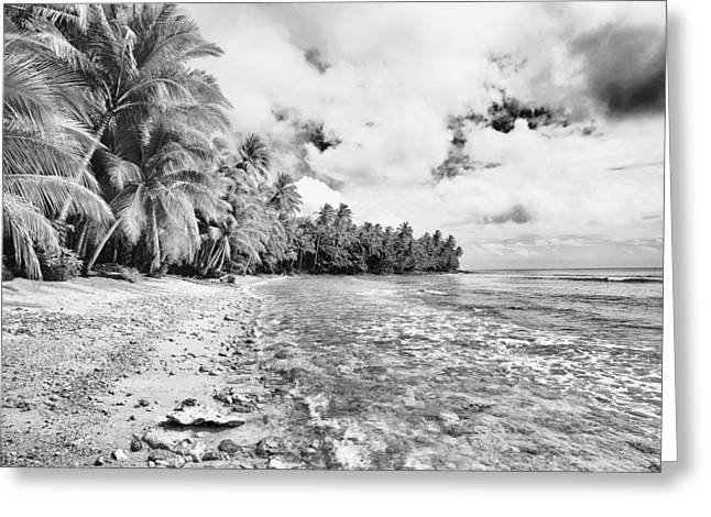 Surfing Art Greeting Cards - Palm Bay Greeting Card by Skip Nall