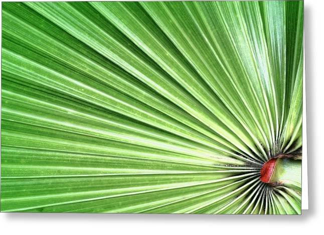 Geometric Shape Greeting Cards - Palm leaf Greeting Card by Rudy Umans