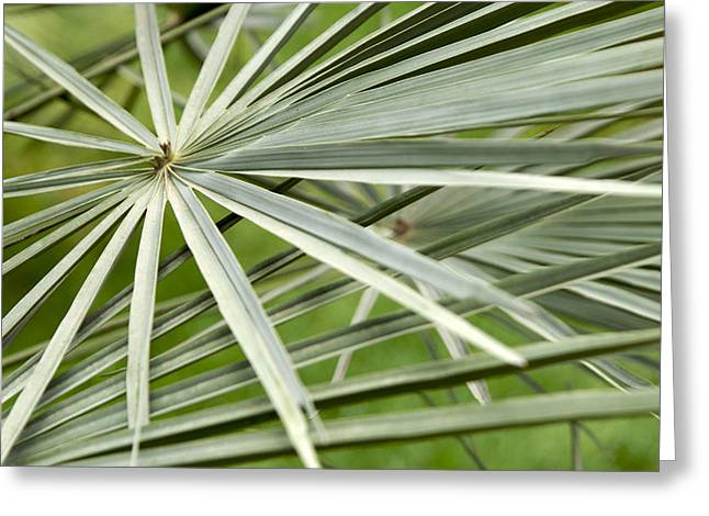 Palm Leaves Greeting Card by Johnny Greig