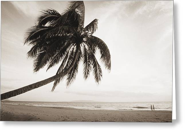Overhang Greeting Cards - Palm Over Beach Greeting Card by Ron Dahlquist - Printscapes