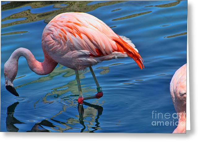 Marriot Greeting Cards - Palm Springs Flamingo Greeting Card by Tommy Anderson