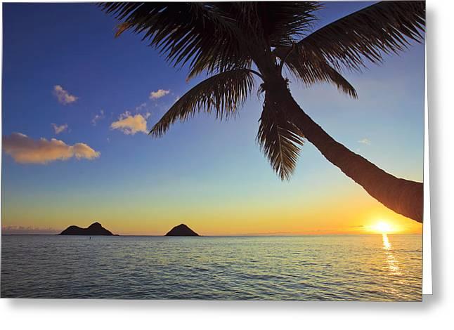 Amazing Sunset Greeting Cards - Palm Sunrise at Lanikai II Greeting Card by Tomas del Amo