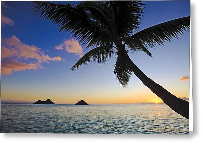 Amazing Sunset Greeting Cards - Palm Sunrise at Lanikai Greeting Card by Tomas del Amo
