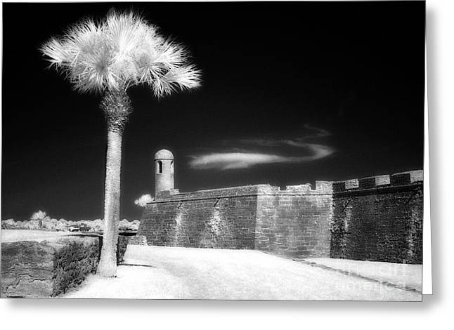 Jeff Holbrook Greeting Cards - Palm Tree and Castillo Greeting Card by Jeff Holbrook