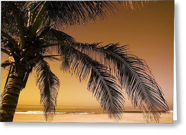 Palm Tree And Sunset In Mexico Greeting Card by Darren Greenwood