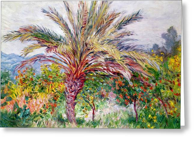 Growth Paintings Greeting Cards - Palm Tree at Bordighera Greeting Card by Claude Monet