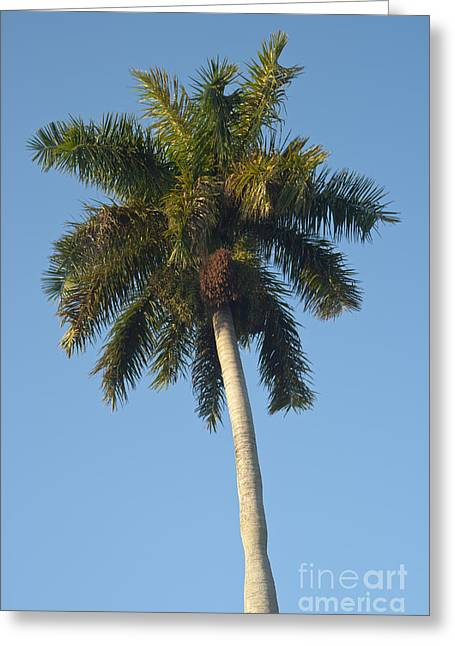 Coconut Palm Tree Greeting Cards - Palm tree Greeting Card by Blink Images