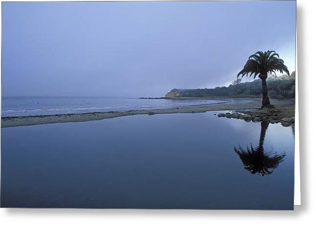 Palm Tree Reflection Greeting Cards - Palm Tree Reflection In An Estuary Greeting Card by Rich Reid