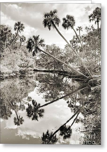 Palm Tree Reflection Greeting Cards - Palm Tree Reflections Greeting Card by Dustin K Ryan