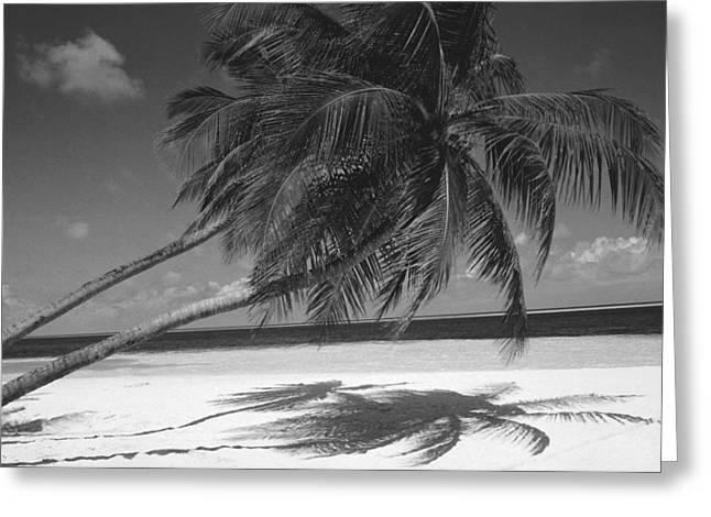 Coconut Palm Tree Greeting Cards - Palm tree shadow on sand Greeting Card by Anonymous