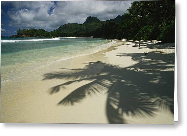 Scenes And Views Photographs Greeting Cards - Palm Tree Shadows On A Beach Greeting Card by Bill Curtsinger