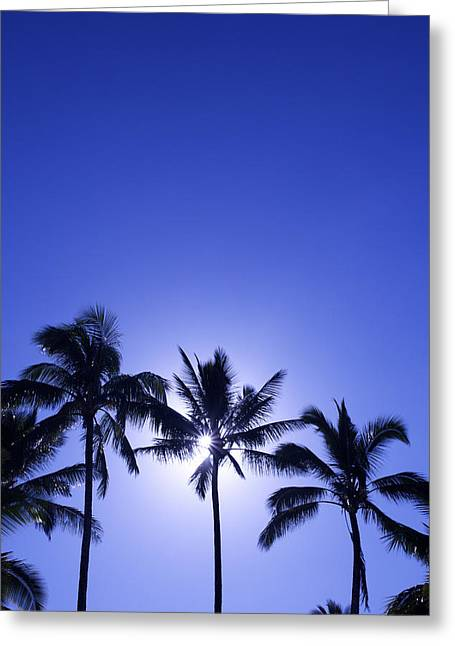 Backlit Greeting Cards - Palm Tree Silhouettes Greeting Card by Kicka Witte - Printscapes