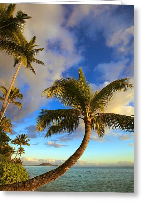 Amazing Sunset Greeting Cards - Palm Tree Sunrise Greeting Card by Tomas del Amo