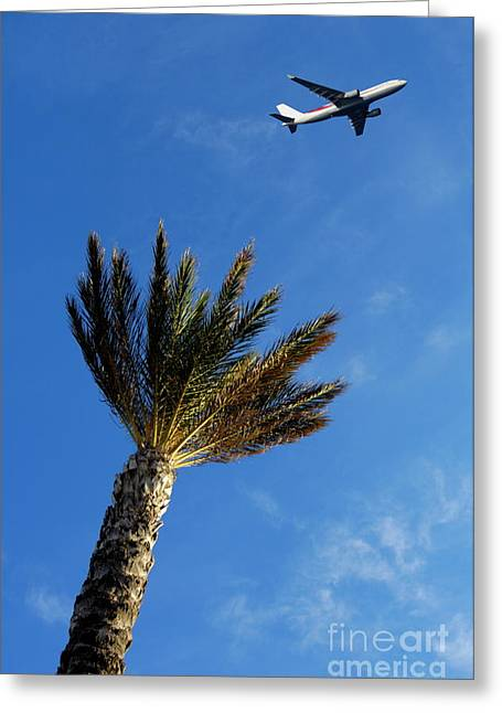 Sami Sarkis Greeting Cards - Palm tree with aeroplane flying in background Greeting Card by Sami Sarkis