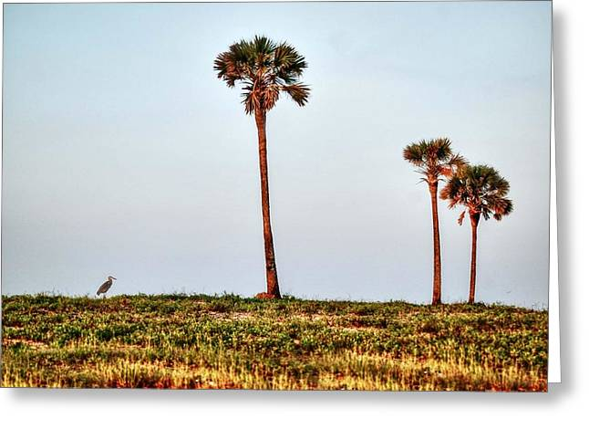 Crimson Tide Greeting Cards - Palm Trees and Heron Greeting Card by Michael Thomas