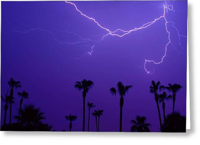 Arizona Lightning Greeting Cards - Palm Trees and Spider Lightning Striking Greeting Card by James BO  Insogna