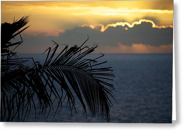 Tropical Oceans Greeting Cards - Palm trees at sunset Greeting Card by Ivan SABO
