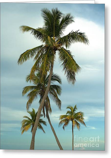 Coconut Palm Tree Greeting Cards - Palm trees Greeting Card by Blink Images