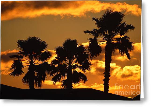 Reflection Of Sun In Clouds Greeting Cards - Palm Trees in Sunrise Greeting Card by Susanne Van Hulst